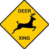 Driving Tips During Deer Hunting Season